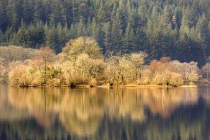 Trees reflected in a still loch in Galloway Forest Park